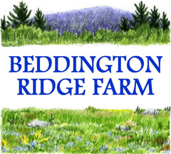 BEDDINGTON RIDGE FARM